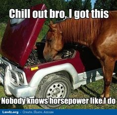 chill-out-bro-i-got-this-nobody-knows-horsepower-like-i-do-horse-car-meme.jpg (499×492)