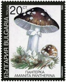 Buy and sell stamps from Bulgaria. Meet other stamp collectors interested in Bulgaria stamps. Bulgaria, Poisonous Mushrooms, Sell Stamps, Stamp Catalogue, Stamp Collecting, Postage Stamps, Flora, Moose Art, Stuffed Mushrooms