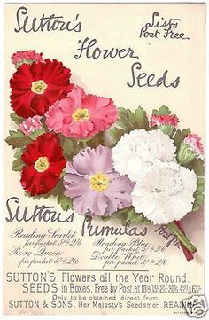 vintage sutton seed packets - Google Search