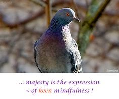 ... #majesty is the expression ~ of keen #mindfulness !