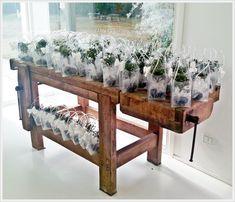 Bomboniere per matrimonio, bomboniere bonsai, bomboniere solidali, regali aziendali #vogliadibonsai