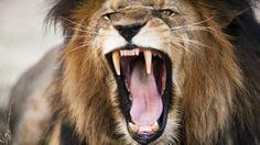 """El """"intento de suicidio"""" que causó la muerte de dos leones en el zoológico de Santiago de Chile - BBC Mundo"""