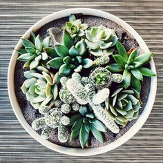A pretty planting for those Monday blues!  #shoppigment #prettyplanting #succulent #oneofakind