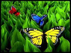 Ποιήματα - Αποφθέγματα is under construction Widescreen Wallpaper, Free Hd Wallpapers, Cool Wallpaper, Mobile Wallpaper, You Give Me Butterflies, Beautiful Butterflies, What Image, Butterfly Pictures, Green Photo