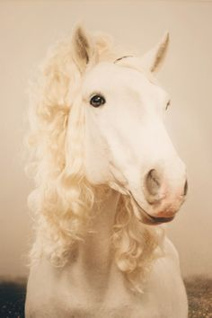 Basically, horses are the most exquisitely coiffed of all living creatures. 20 Horses With Better Hair Than You All The Pretty Horses, Beautiful Horses, Animals Beautiful, Cute Animals, Party Animals, Majestic Horse, Horse Mane, Curly Horse, Funny Horses