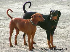 Pin by Cold Nose Warm Heart on daily dog breed Dog