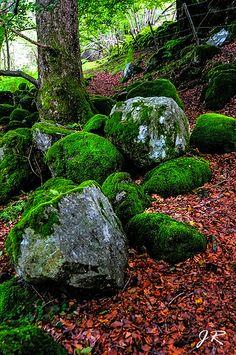 Natural Emeralds. Wicklow Mountains. Ireland