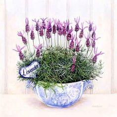 Lavender in a tea cup Decoupage Vintage, Decoupage Paper, Vintage Diy, Vintage Images, Vintage Labels, Flower Images, Flower Art, Etiquette Vintage, Lavender Cottage