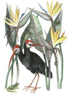 Ibis and Strelitzias