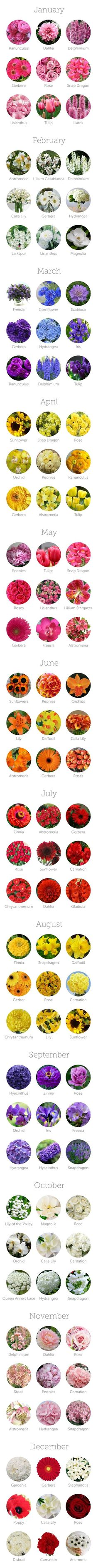 Flowers Available By Season / The Budget Savvy Bride. Not getting married, just love flowers! :)