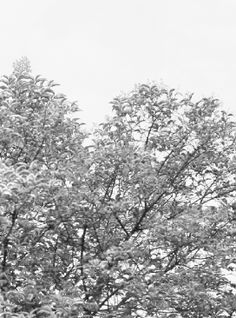 trees, nature