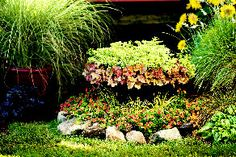 """Trvalky do polotieňa  Kombinácia heucher (Heuchera """"Peach Melba"""") a mliečnika (Euphorbia Euphorbia """"Helenas Blush) - hore v záhone. Dolu sú vysadené kvitnúce letničky."""