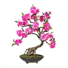 Spring Flowers for your home Bonsai, Candy Colors, Globes, Spring Flowers, Colours, Pink, Floral, Plants, Design