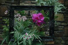 Orchids are framed as a piece of art in the Orchid Conservatory at Daniel Stowe Botanical Garden.