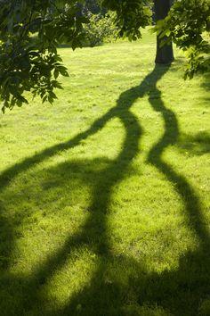 Shadowed at @The New York Botanical Garden
