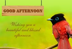 Good Afternoon - Good Afternoon Wishes Images, Whatsapp Free Images Good Afternoon Quotes, Morning Quotes, Angel Wallpaper, Best Coffee Shop, Good Morning Love, Wishes Images, Morning Greeting, Months In A Year, Inspirational Quotes