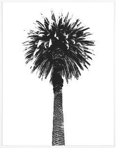 Elysian Palm | Natural Curiosities