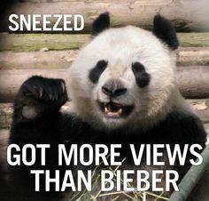 Panda Quotes. QuotesGram