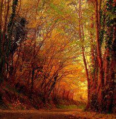 Autumn woods