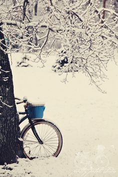 Fine Art Photograph, Winter Scene, Vintage Bicycle with Floral Blue Basket Leaning on Snowy Tree, Pretty Petal Studio via Etsy. #fpoe