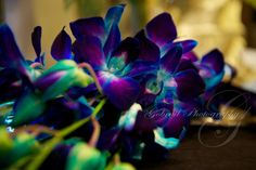 Such incredible orchids! Gobrail Photography