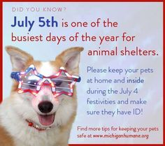 The Fourth of July isn't until Friday but fireworks have already started up in many communities. This week and especially on July make sure your animals are secure and have ID. Fireworks are scary and can cause many pets to bolt. Pet Care Tips, Days Of The Year, Pet Safe, Animal House, Animal Welfare, Safety Tips, Animal Shelter, Fourth Of July, Dogs And Puppies