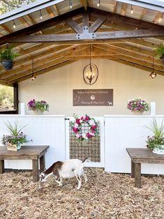 Mini Goats, Cute Goats, Goat Barn, Farm Barn, Goat Playground, Goat Shed, Farm Hacks, Goat House, Goat Yoga