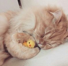 Don't take my Ducky.