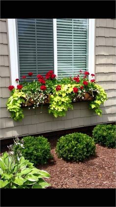 42 Best Flowers for Window Boxes 33 25 Best Ideas About Window Box Flowers On Pi… - Pflanzideen Window Box Plants, Window Box Flowers, Window Planter Boxes, Planter Ideas, Window Sill, Outdoor Pots, Outdoor Gardens, Outdoor Flower Planters, Outdoor Flowers
