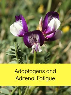 ADAPTOGENS HERBS FOR STRENGTH DOWNLOAD