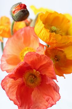 Poppies grown by Love 'n Fresh Flowers