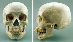 skull2.jpg (736×432)