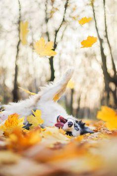 Ein schöner Herbst tag und ein fröhlicher Hund ❤
