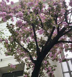 八重桜も満開です。
