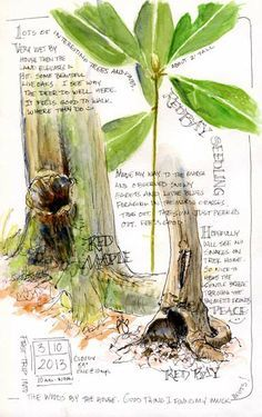 Sketching in Nature: Happy Spring