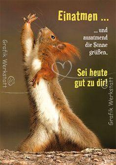 guten morgen - http://guten-morgen-bilder.de/bilder/guten-morgen-555/