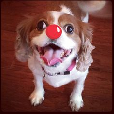 lucy - Dogs can help kids too. #rednoseday
