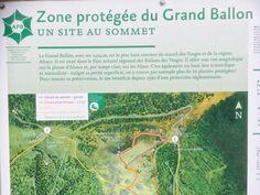 Vanaf een parking langs de weg voert een pad je in 20 minuten omhoog naar Le Grand Ballon