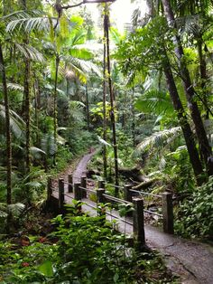 El Yunque Rainforest in Puerto Rico. Stunningly beautiful and as in most of Puerto Rico, the tree frog is singing it's Corkee song. Puerto Rico Trip, San Juan Puerto Rico, Dream Vacations, Vacation Spots, Beautiful Islands, Beautiful Places, Places To Travel, Places To See, El Yunque Rainforest
