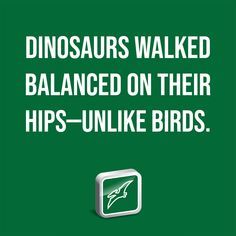 Dinosaurs walked balanced on their hips—unlike birds. Institute For Creation Research, Western Michigan University, Young T, Recent Discoveries, Baby Dinosaurs, Dinosaur Design, Earth Science, T Rex, Discovery