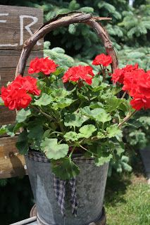 geraniums in wooden containers Geraniums Garden, Red Geraniums, Potted Garden, Garden Club, Summer Garden, Nail Swag, Container Plants, Container Gardening, Flower Containers