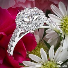 "Platinum ""Rounded Pave Halo"" Diamond Engagement Ring"