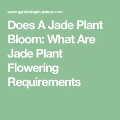 Does A Jade Plant Bloom: What Are Jade Plant Flowering Requirements