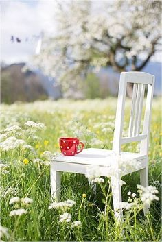 white chair in green field with cowslip and daisies - pretty