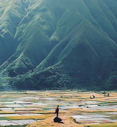 Even the farms are mega exotic on the island of Lombok, Indonesia ///