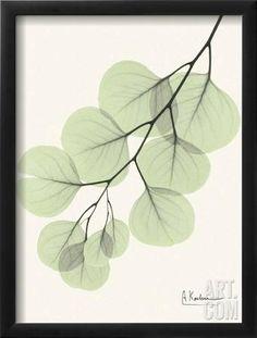 Cascading Eucalyptus Framed Art Print by Albert Koetsier at Art.com