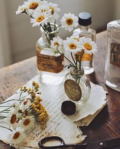 Cozy Aesthetic, Nature Aesthetic, Flower Aesthetic, Aesthetic Vintage, Aesthetic Photo, Aesthetic Pictures, Art Journal Pages, Aster, Pretty Flowers
