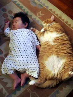 Asian babies and cats. My 2 favorite things.