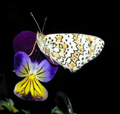 Vibrant image of beautiful butterfly on purple flower