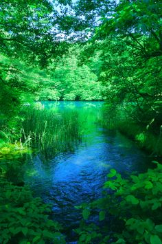 Goshiki-numa, a cluster of five volcanic lakes at the foot of Mount Bandai, Fukushima, Japan 五色沼 << It's so green Beautiful World, Beautiful Places, Beautiful Pictures, Beautiful Scenery, All Nature, Amazing Nature, Nature Pictures, Natural World, Belle Photo